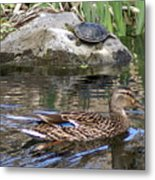 Turtle And Duck Metal Print