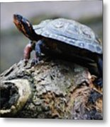 Turtle And The Hippo Metal Print
