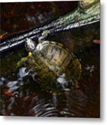 Turtle And The Stick Metal Print