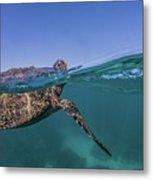 Turtle Breath Metal Print