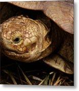 Turtle Closeup Metal Print