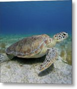 Turtle Cove Metal Print