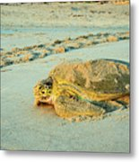 Turtle Day Metal Print