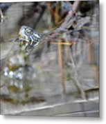 Turtle Eye Reflection Metal Print