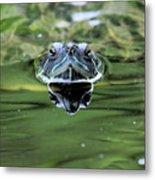 Turtle Head Metal Print