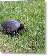 Turtle In The Grass Metal Print