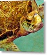 Turtle Life Metal Print