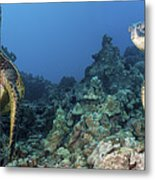 Turtle Panorama Metal Print by Dave Fleetham - Printscapes