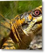 Turtle-turtle Metal Print by Stephanie  Varner