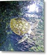 Turtle Water Glide Metal Print