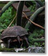 Turtles Butt Metal Print