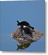 Turtles Tanning Metal Print