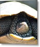 Turtley Enough Metal Print