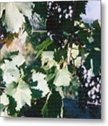 Tuscan Grapes Photograph Metal Print