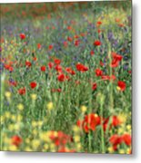 Tuscan Wildflowers Metal Print