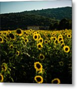 Tuscany - Sunflowers At Sunset Metal Print