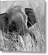 Tusker In The Grass Metal Print