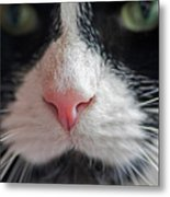 Tuxedo Cat Whiskers And Pink Nose Metal Print