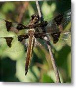 Twelve Spotted Skimmer Dragonfly Metal Print