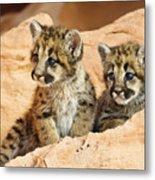 Twin Cougar Kittens Metal Print