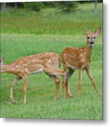 Twin Fawns Playing Metal Print