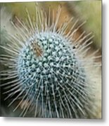 Twin Spined Cactus Metal Print
