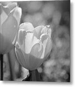 Twin Tulips B/w Metal Print