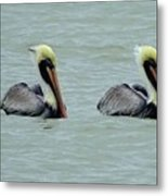 Twins Brown Pelican In Gulf Of Mexico Metal Print