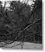 Twisted And Wet Metal Print