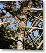 Twisted Branches Metal Print