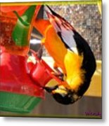 Twisted Oriole Metal Print