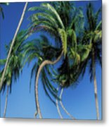 Twisted Palms On The Island Of Trinidad Metal Print