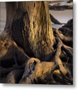 Twisted Revealed  Metal Print