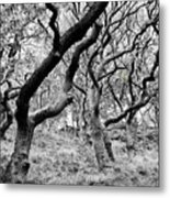 Twisted Woodland Metal Print