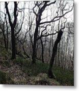Twisted Woods Metal Print