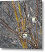 Two American Goldfinch Metal Print