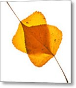 Two Backlit Cottonwood Leaves In Autumn On White Metal Print