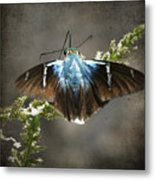 Two-barred Flasher Metal Print