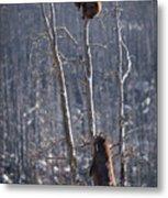 Two Bears Up A Tree Metal Print