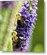 Salvia With Bees Metal Print