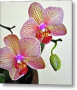 Two Blooms For You Metal Print