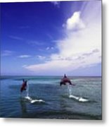Two Bottlenose Dolphins Metal Print