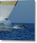 Two Bottlenose Dolphins Swimming In Front Of A Ship Metal Print by Sami Sarkis