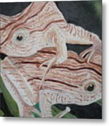 Two Brown Striped Frogs Metal Print