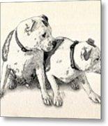 Two Bull Terriers Metal Print by Michael Tompsett