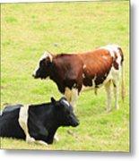 Two Bulls In A Pasture Metal Print