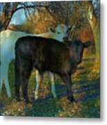 Two Calfs Metal Print