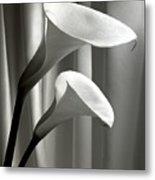 Two Callas Metal Print