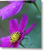 Two Cosmos Metal Print
