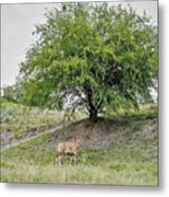 Two Cows And A Tree Metal Print